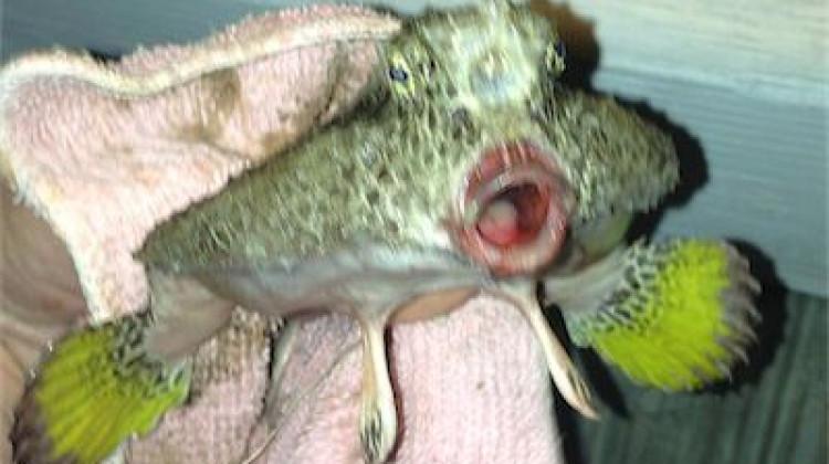 Ugly Fish!!!