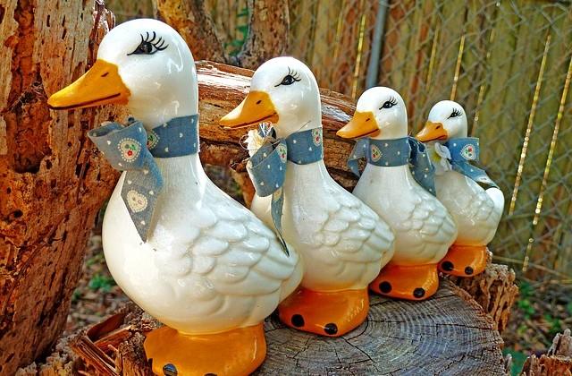 The Snowbirds Are Coming! The Snowbirds Are Coming!!