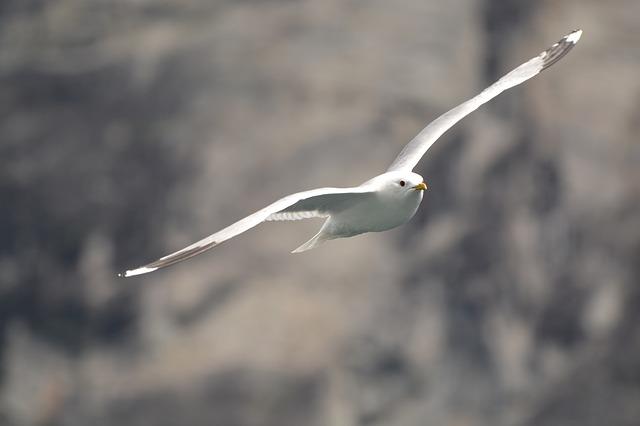 Flying, Bird