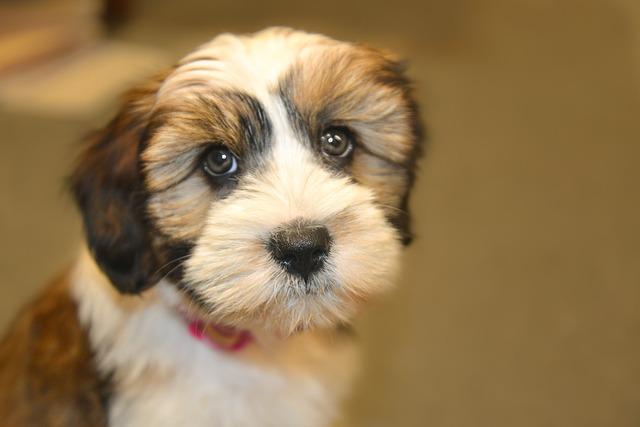 Cute, Dog