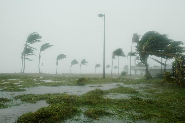 Hurricane, Palm