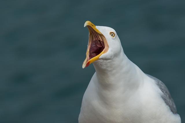 The, Scream