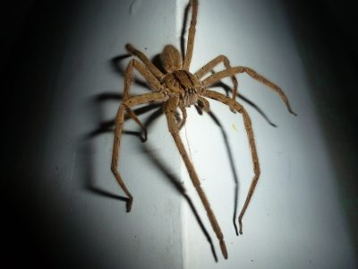 Giant Wolf Spider, Dolphin, Two Arrests and a Forest Fire!