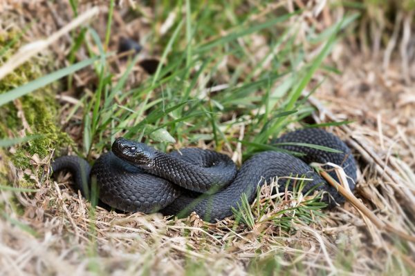 A Snake Fell On My Face! ON MY FACE!!!