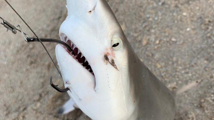 I Caught a Shark! A SHARK!!