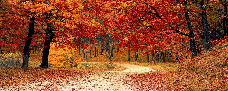 autumn_leaves_1573233186