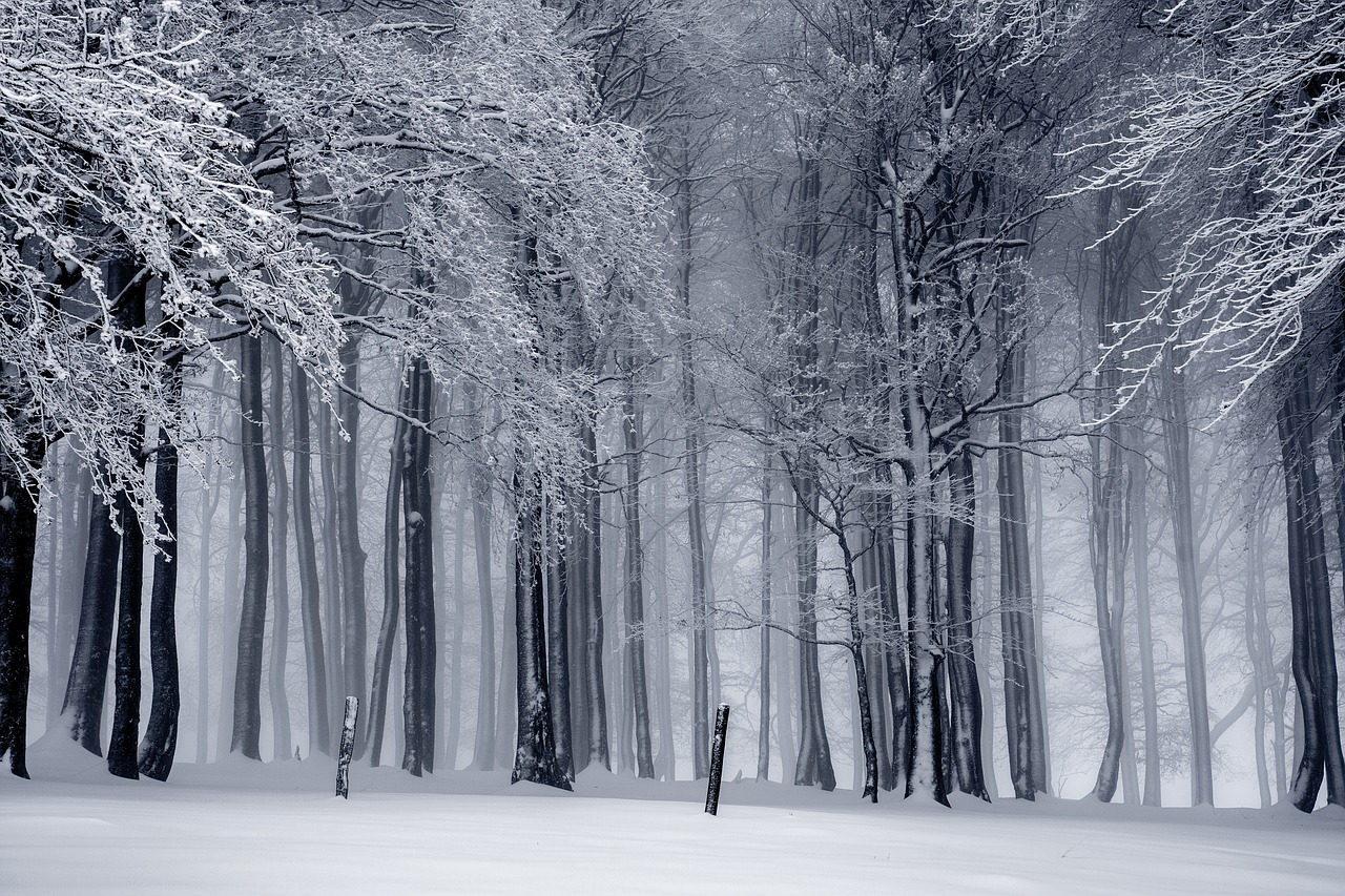 Winter, Forest