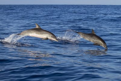 Dolphin Watching! (includes video)