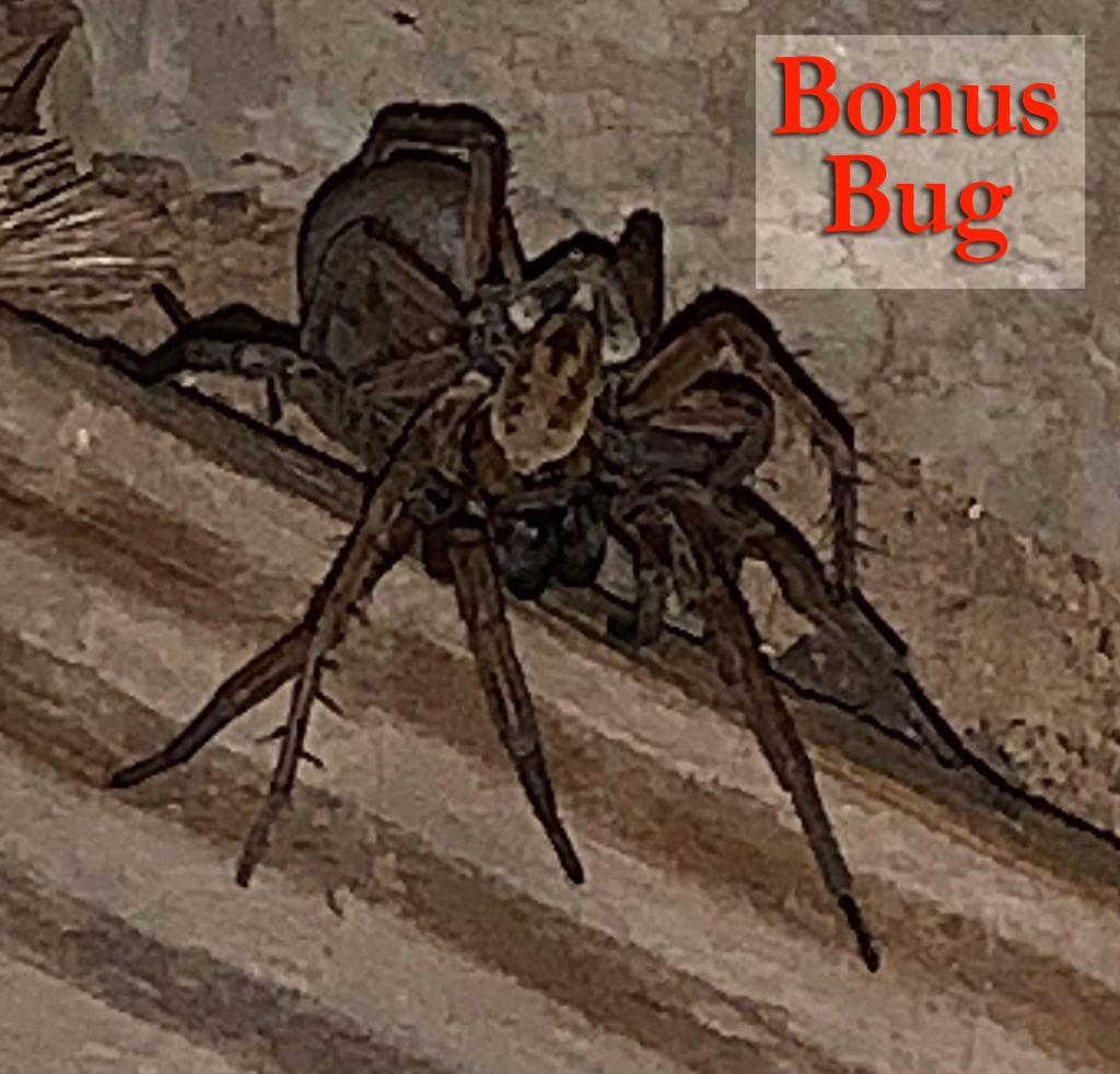 BonusBug