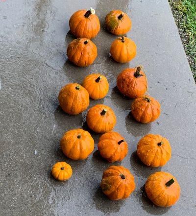pumpkins-small